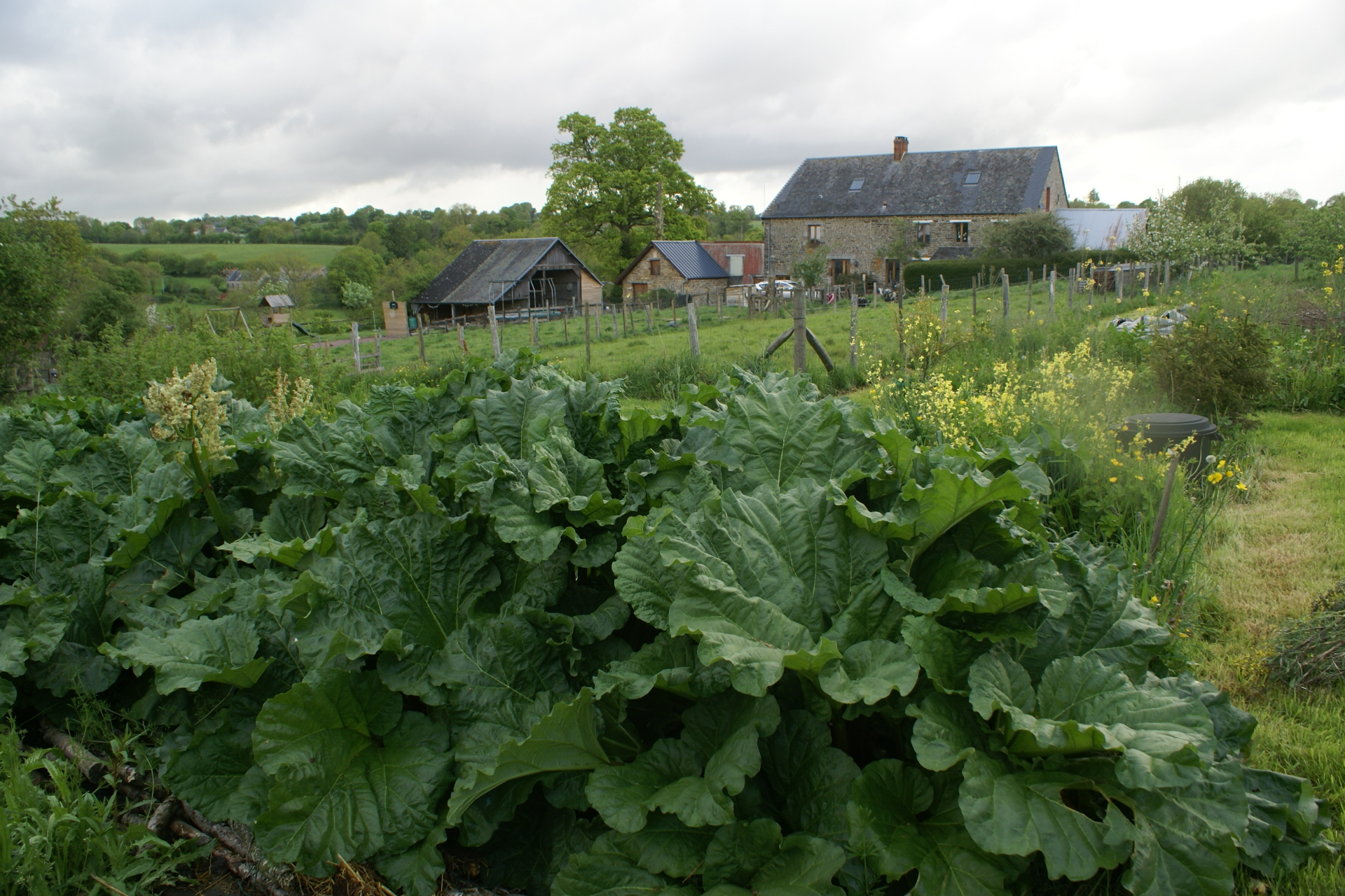 Rhubarb at Eco-Gites of Lenault, a 5 person gite in Normandy.