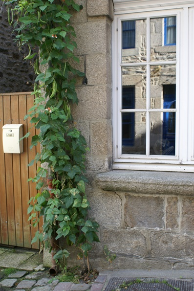 Runner beans in Dinan, Brittany