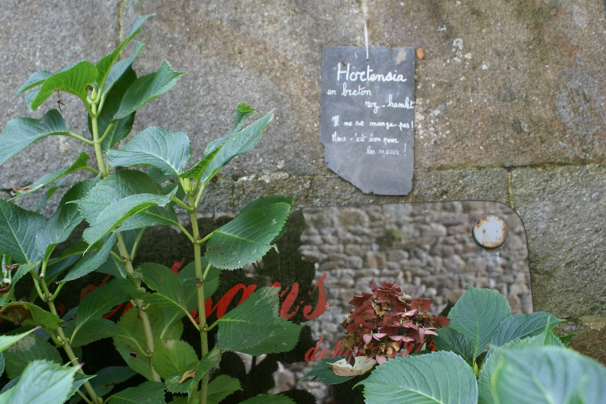 Plant labels in Dinan, Brittany