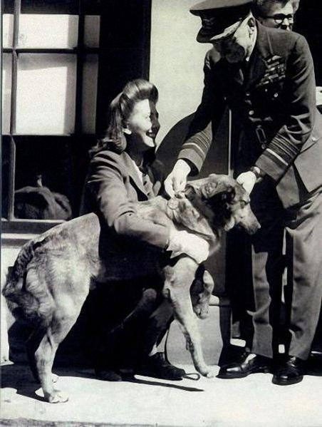 "Bing, the dog ""soldier"" who parachuted int Normandy on D-Day"