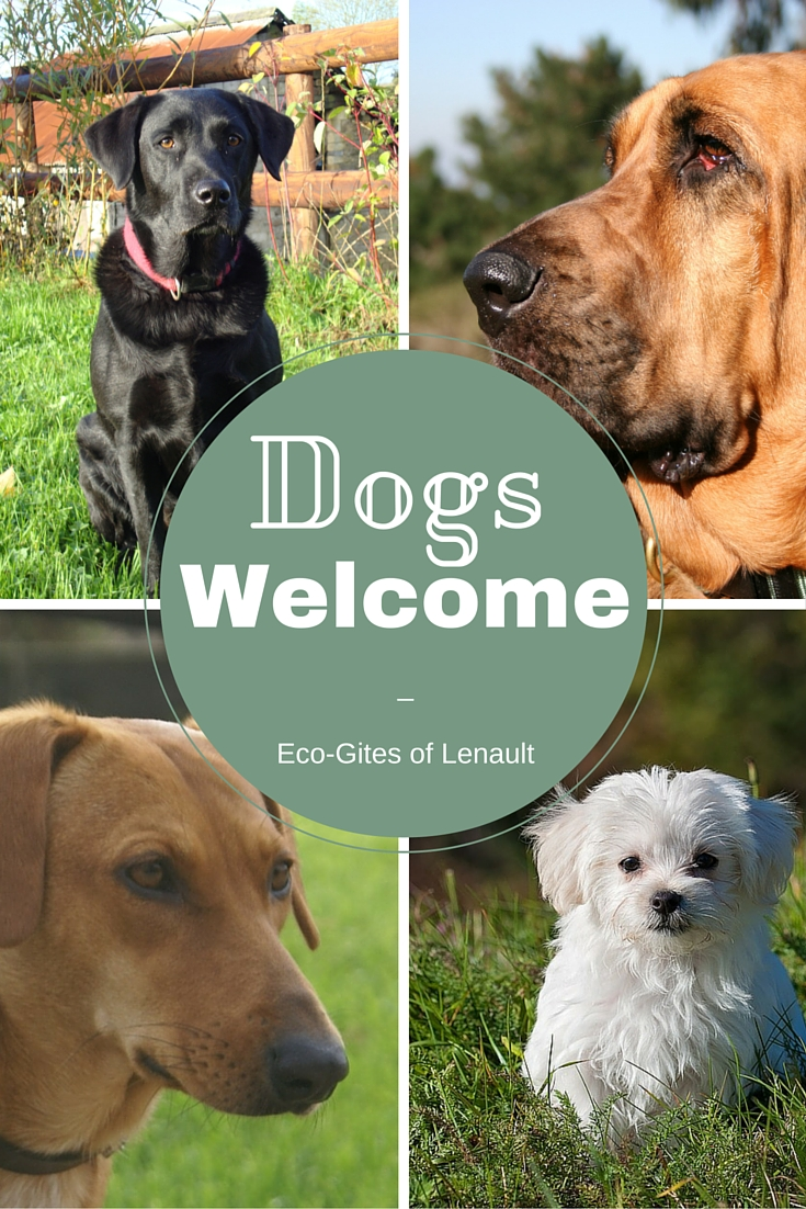 Dog Friendly Gite in Normandy