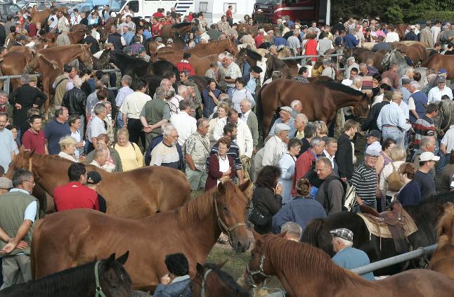 Horses for sale at the Foire Millénaire de la Sainte-Croix in Lessay, Normandy