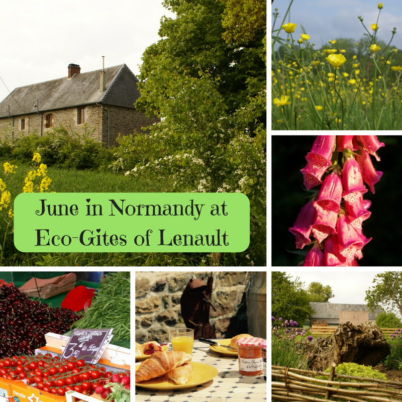June highlights at Eco-Gites of Lenault, Normandy, France