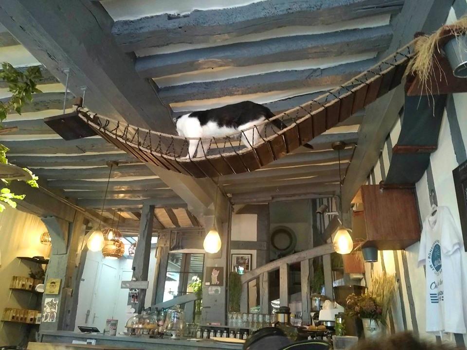 Cat Café, Rouen, Normandy