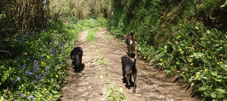 Dog walk along the valley near Eco-Gites of Lenault, holiday gite in Normandy