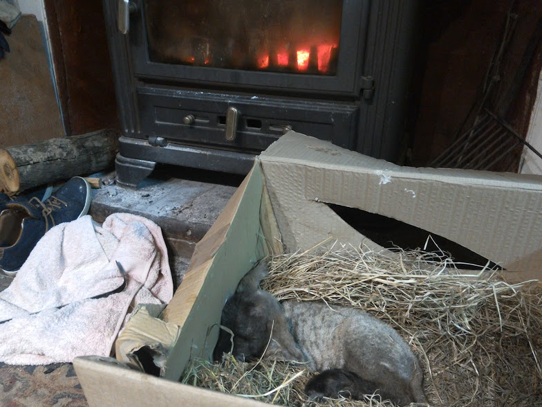 Lamb in a box in front of the fire at Eco-Gites of Lenault