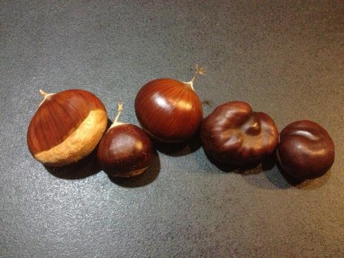 Conkers and Sweet Chestnuts