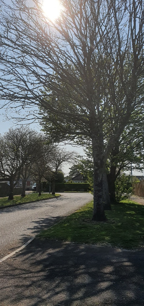 Inglewood drive new forest