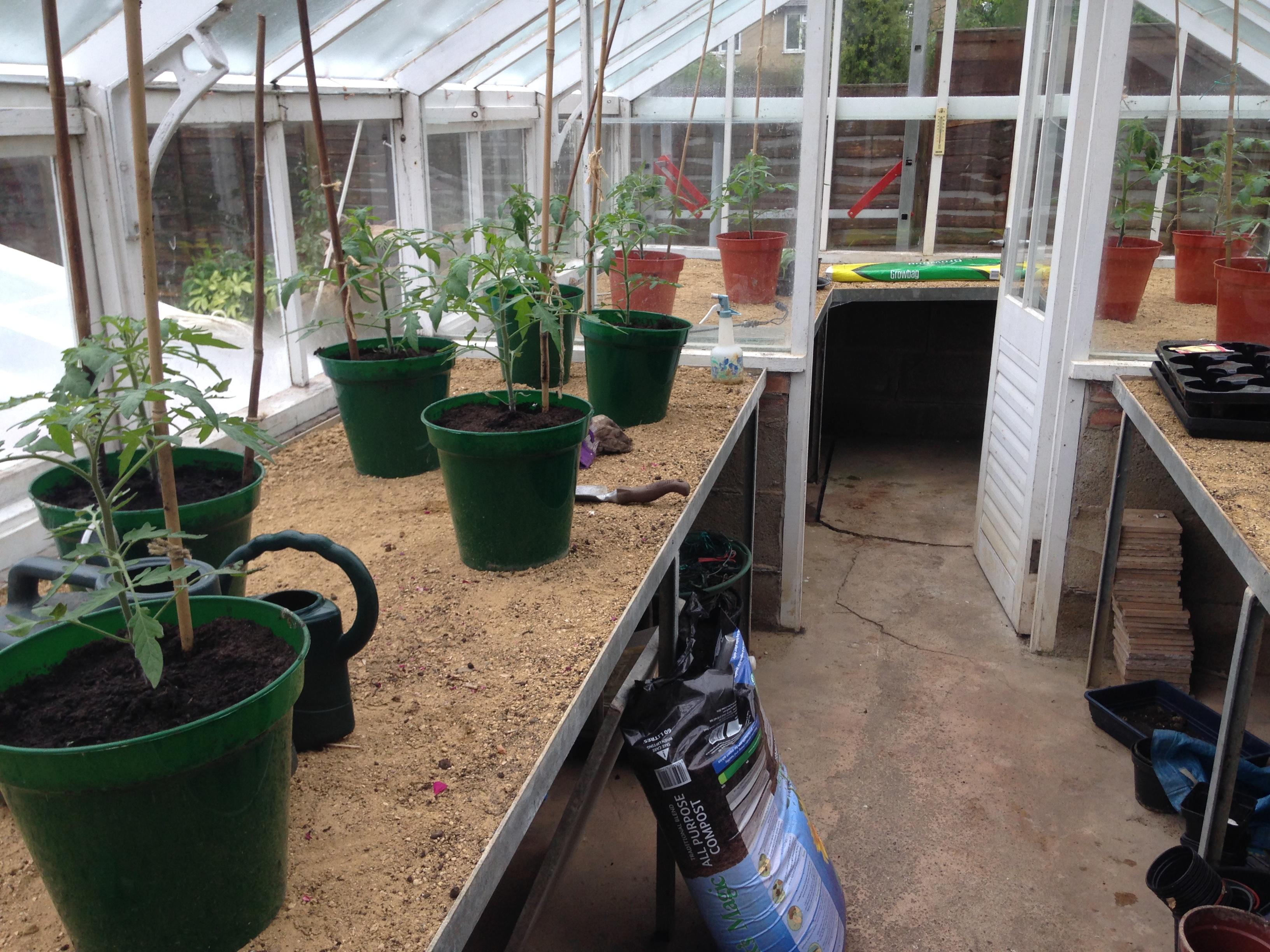 Blog Tomato plants1