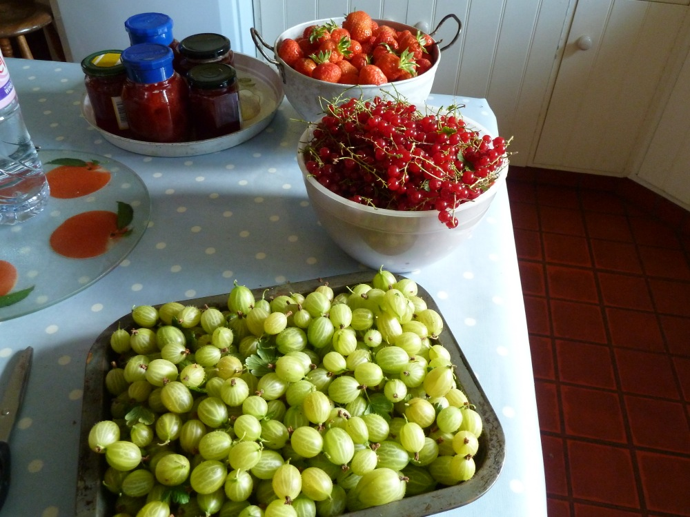 Summer pickings