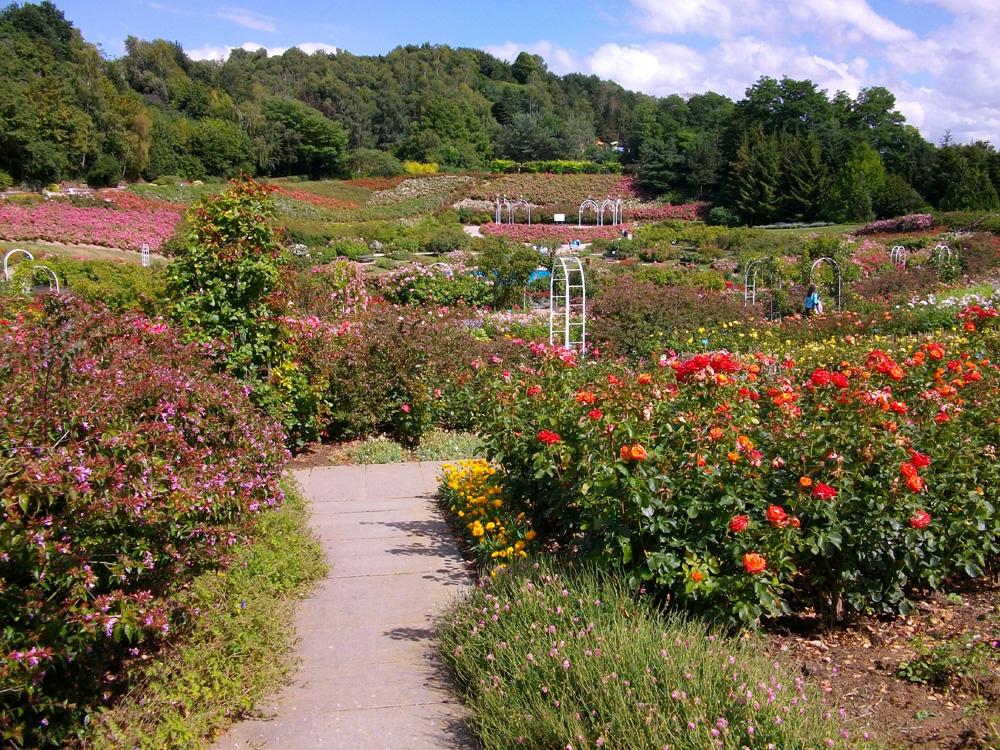 Rosie garden at the Colline aux Ouiseax, Caen, Normandy
