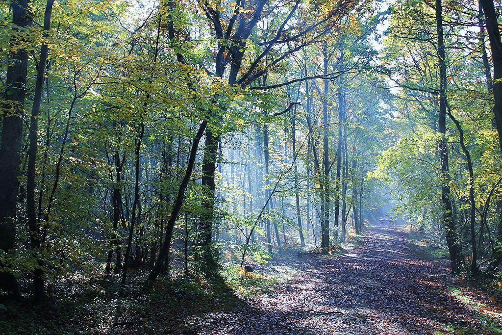 Grimbosq Forest, Cavados, Normandy