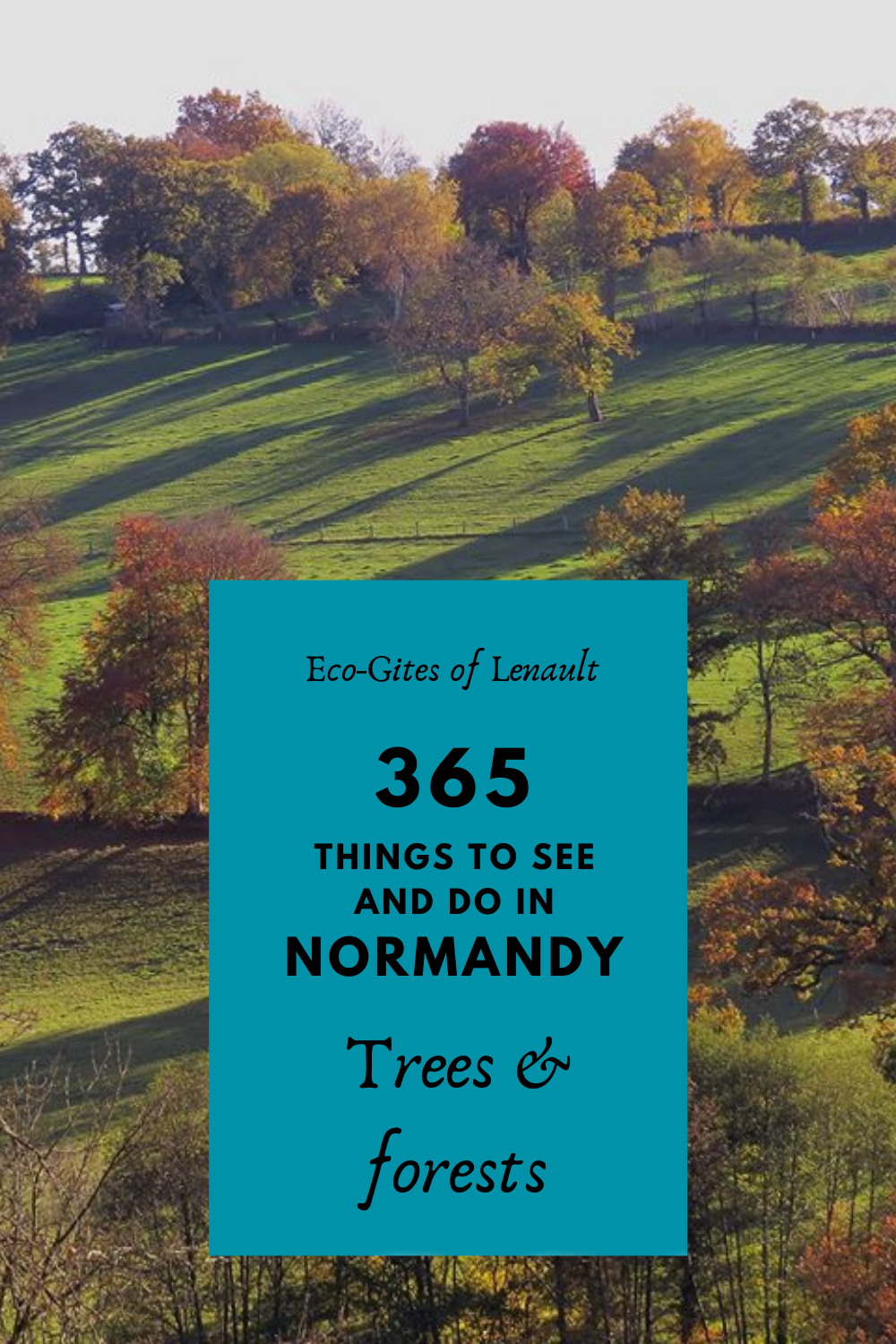 Remarkable trees of Normandy