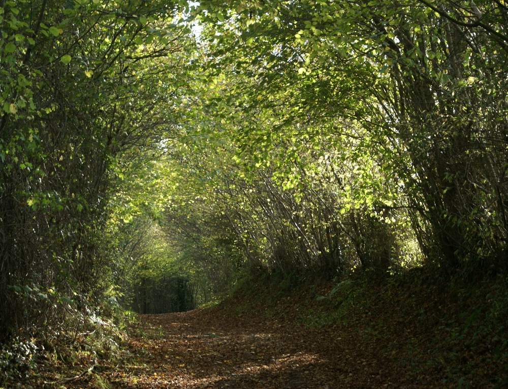 Tree lined sunken path in the Calvados region of Normandy