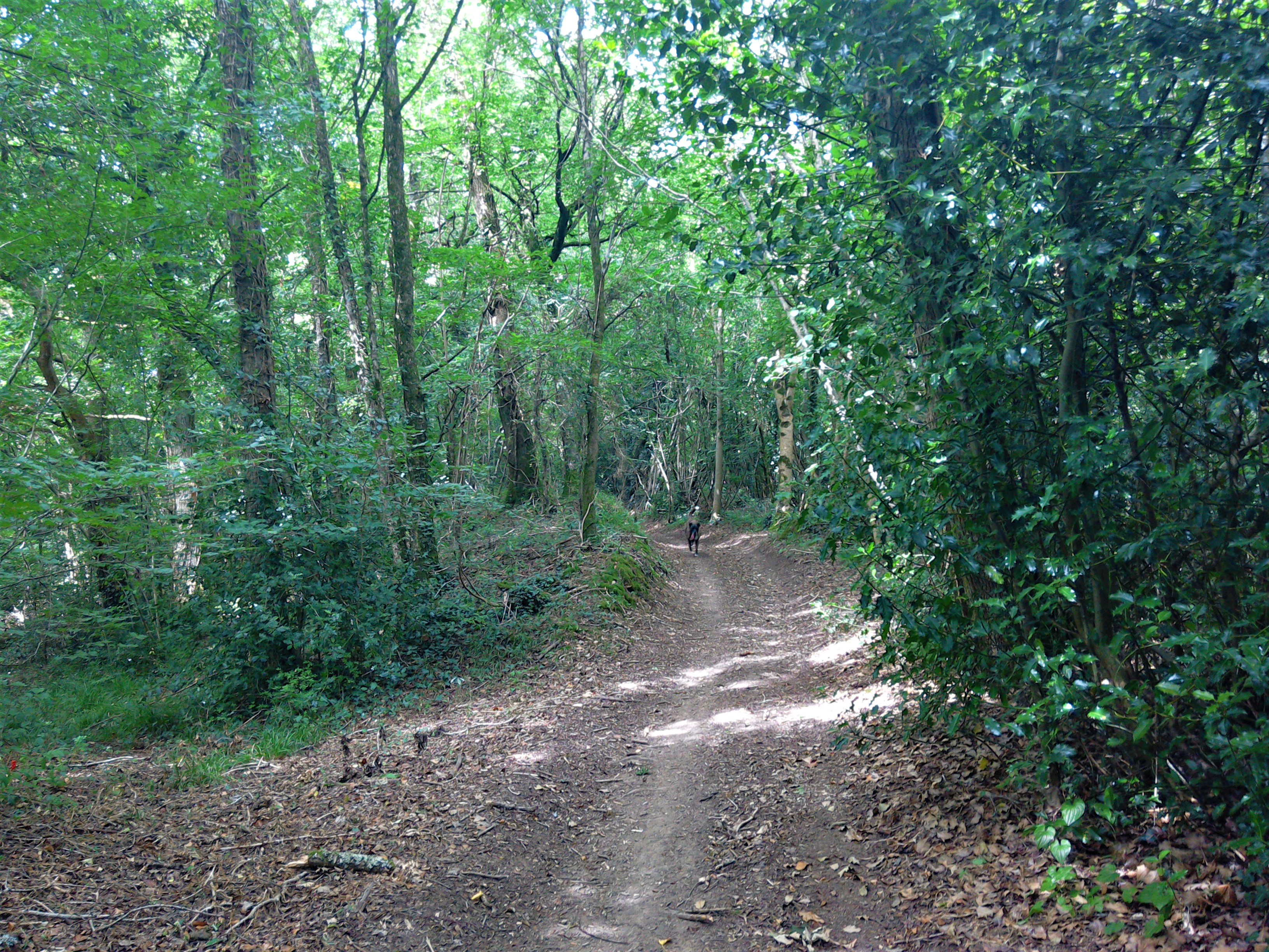 Walks through the woods between Lénault and Saint Jean le Blanc, Normandy, France
