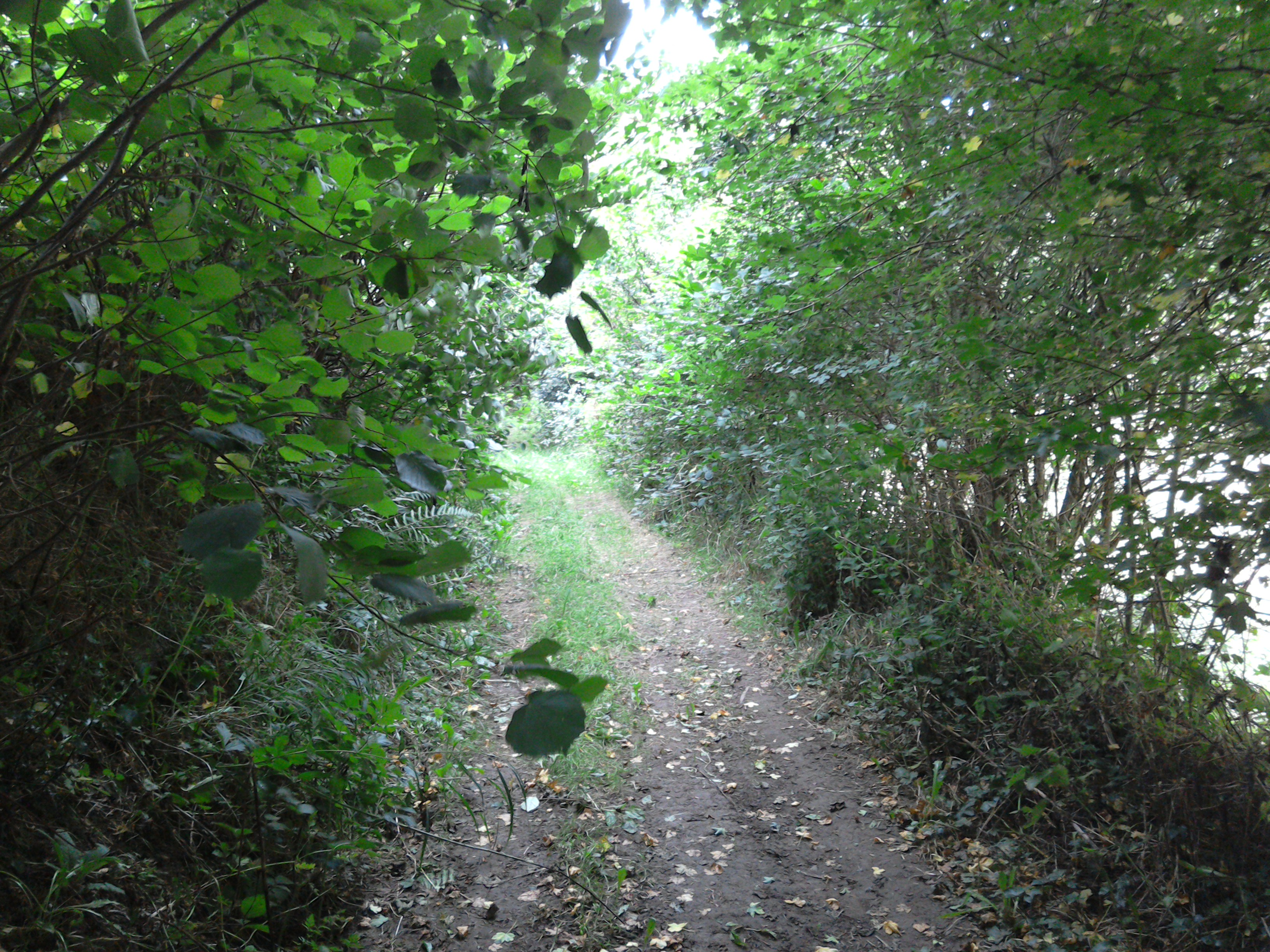 Leafy path through the valley below Eco-Gites of Lenault, holiday cottage in Normandy, France
