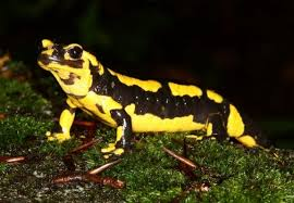 Fire Salamander at Villa Vida Nova, villa rental in the Algarve