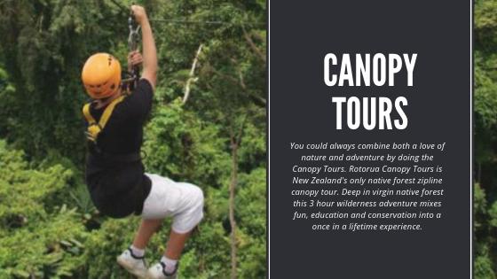 Canopy Tours Rotorua
