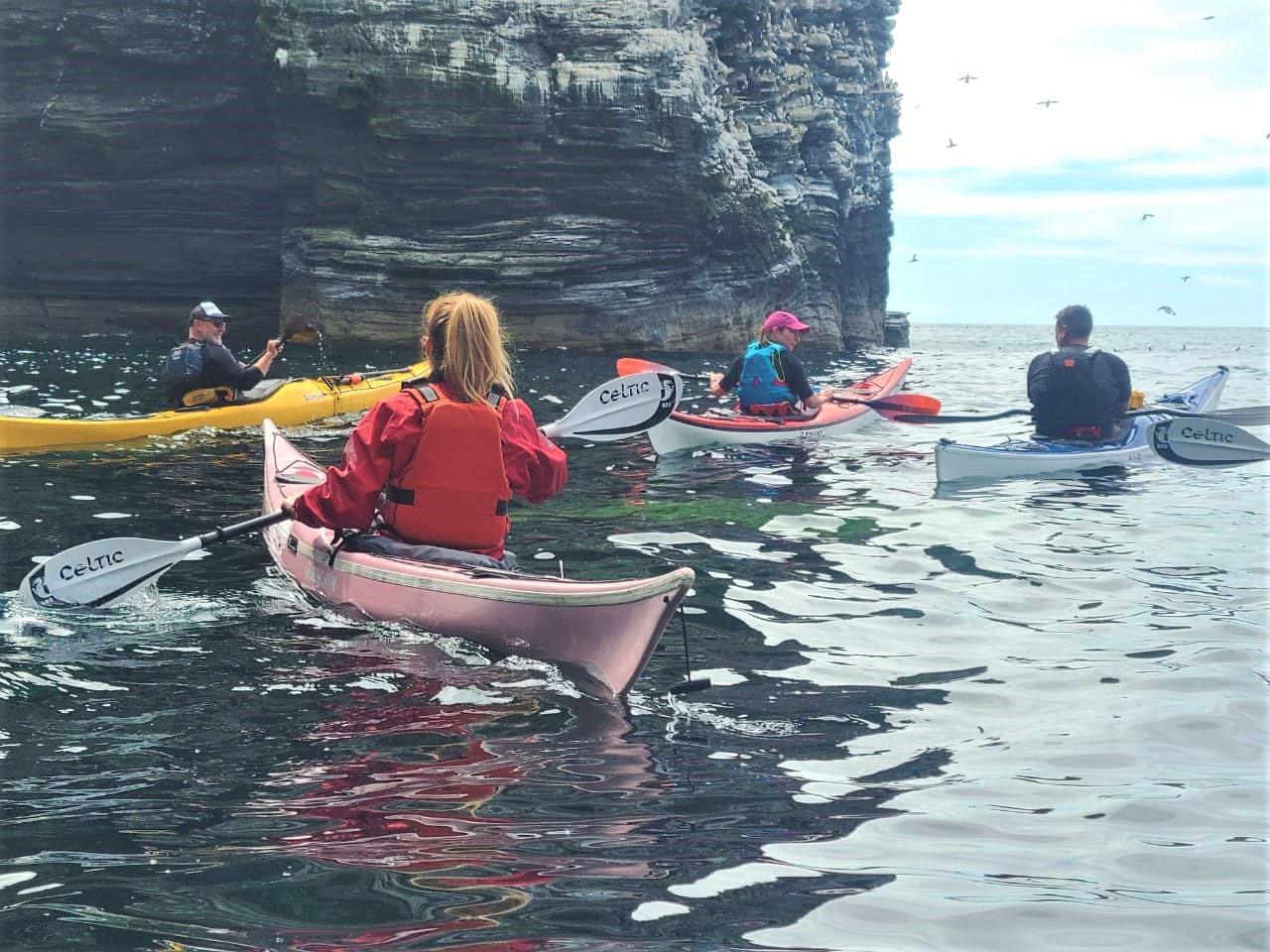 Guillamot spotting in kayaks