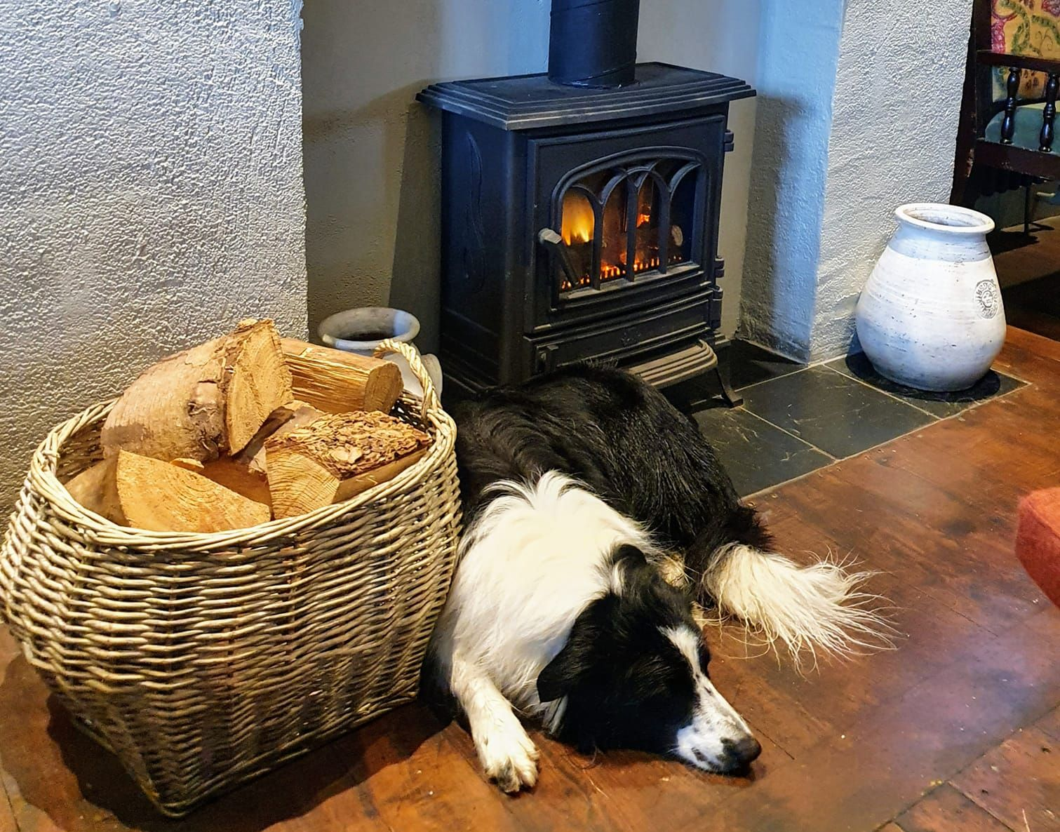 Dogs Welcome in Isle of Man Pubs