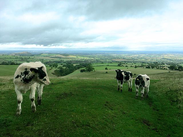 Shropshire Country Life
