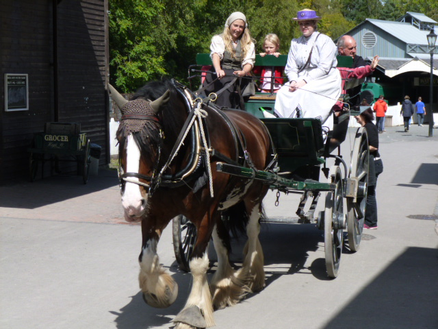 Shire horse on parade