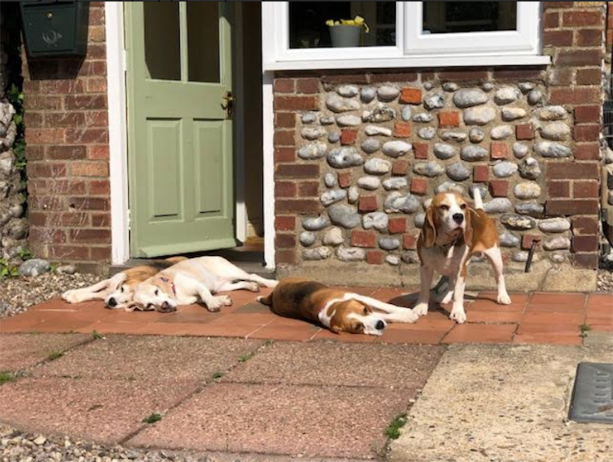 Dogs relaxing on the patio after an exhausting day on West Runcton beach